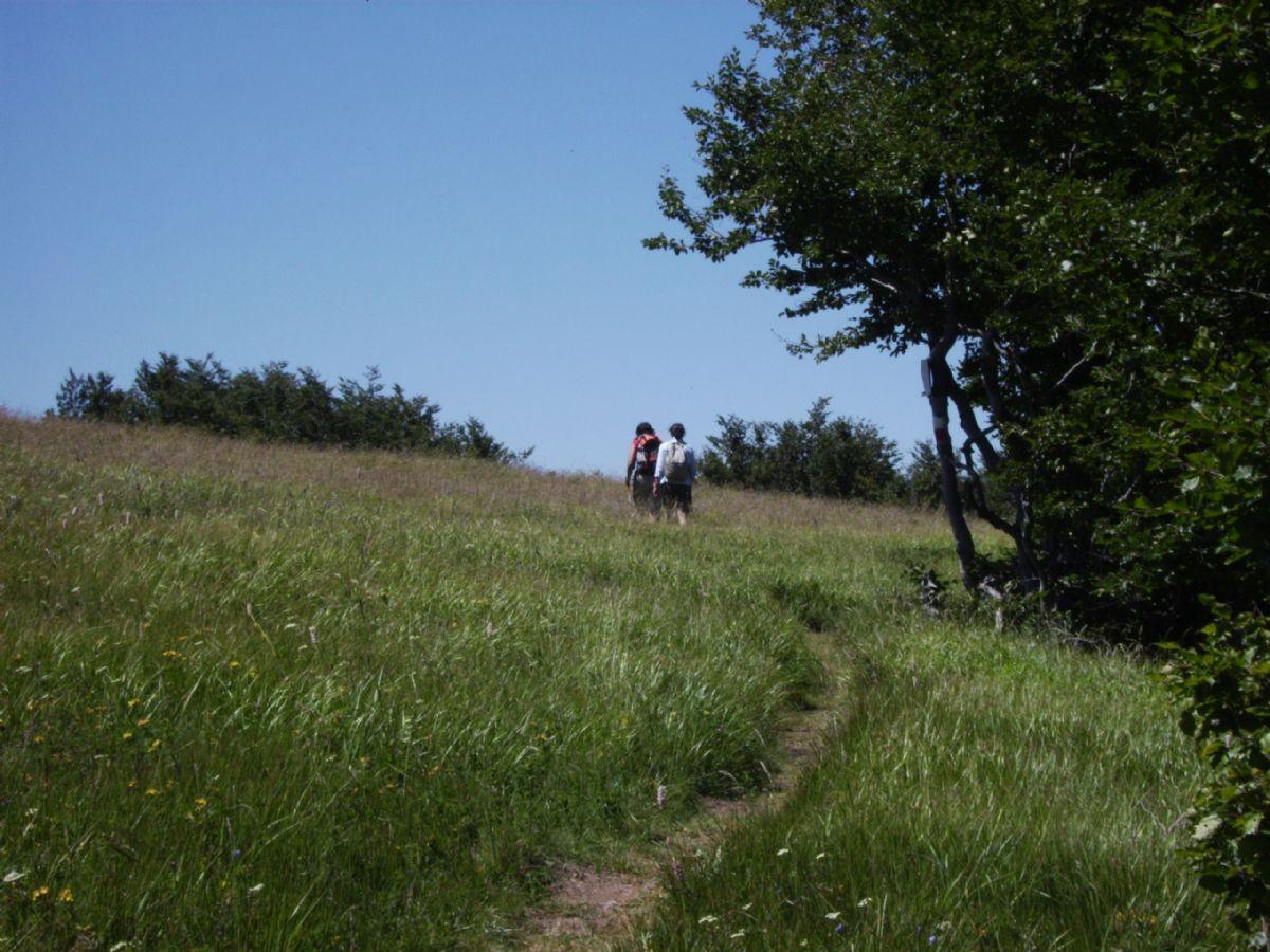 Trekking on Mount Osero