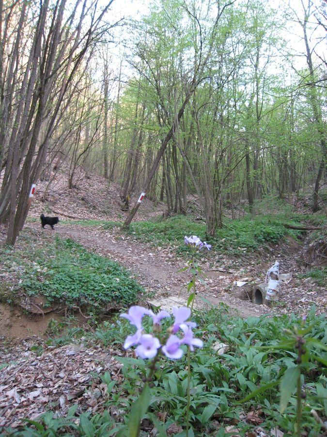 Trekking nel bosco