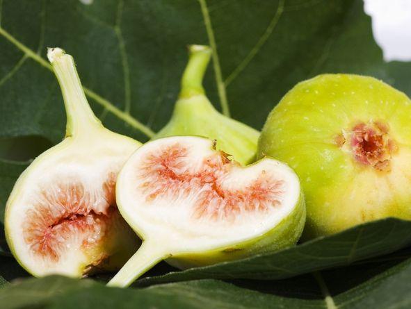 Fig Cake De.Co. of Albarola