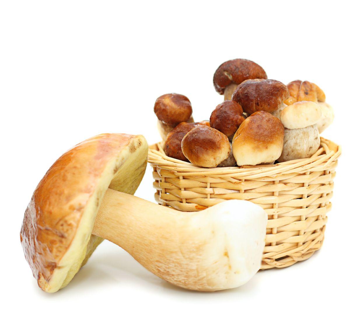 Funghi, i tesori del sottobosco